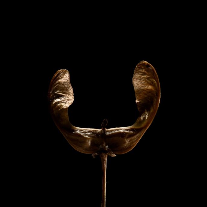 'Ohren' von Felix Roser