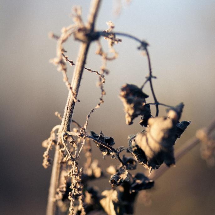 'Trockenes Herbstblatt' von Leonard Salewski