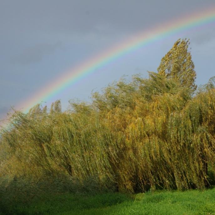 'Regenbogen' von Thomas Beisel